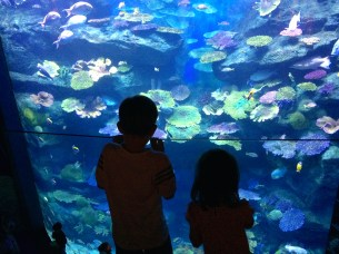 Viewing the multi-story reef tank