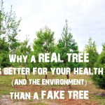 Why A Real Christmas Tree Is Better For Your Health (And The Environment) Than A Fake Tree