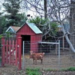 Our First Homesteading Project! – Building the Goat Pen and Barn
