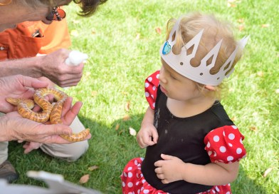 Frogs and Fairytales at the Fresno Chaffee Zoo
