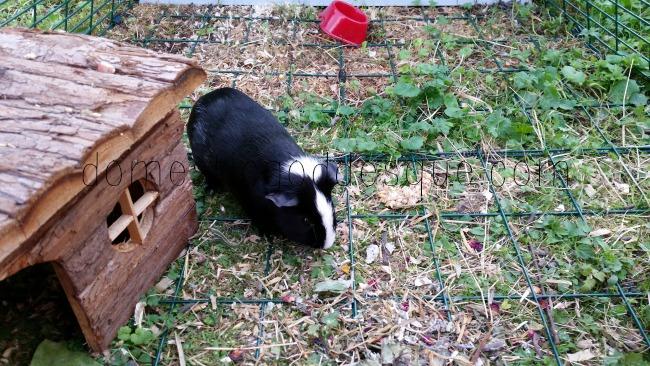 Omlet Guinea Pig Hutch cage bars