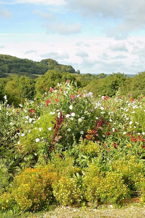 river cottage 10