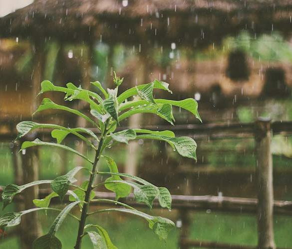 wykorzystanie wody deszczowej