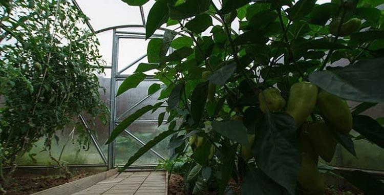szklarnie z poliwęglanu - szklarnia eko