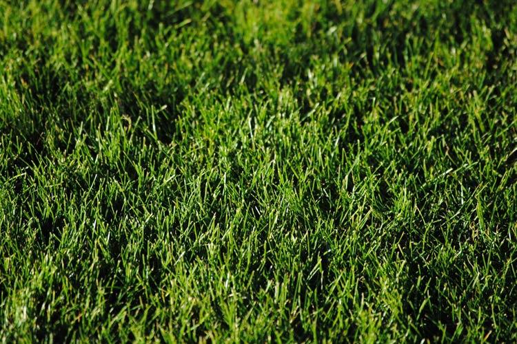 jak siać trawę na starym trawniku