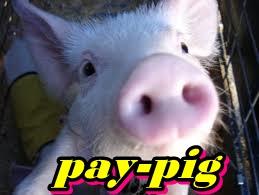 cerdo paypig
