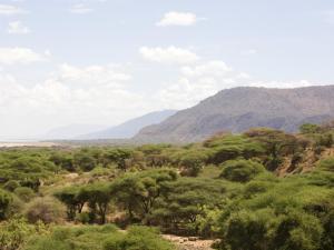 ecosistemas-bosqueacacias