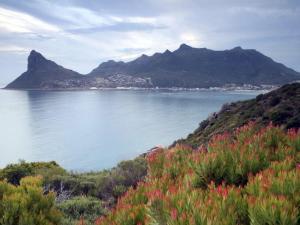 ecosistemas-fynbos