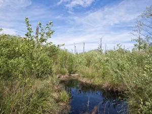 ecosistemas-turberas