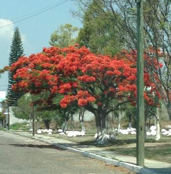 PARQUE DE LAS PIEDRAS, TEHUACÁN