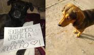 SUJETO MATÓ A CANINO CON HACHA EN SINALOA #JusticiaParaRodolfo
