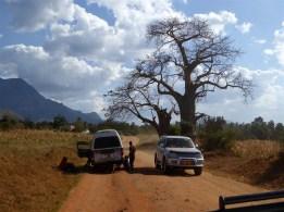 Baobab Tree, Uluguru mountains