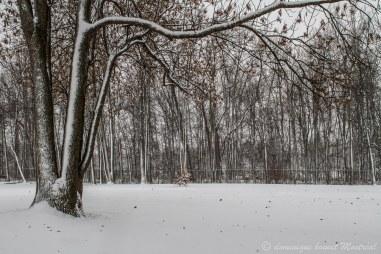 Parc Maisonneuve au début de l'hiver