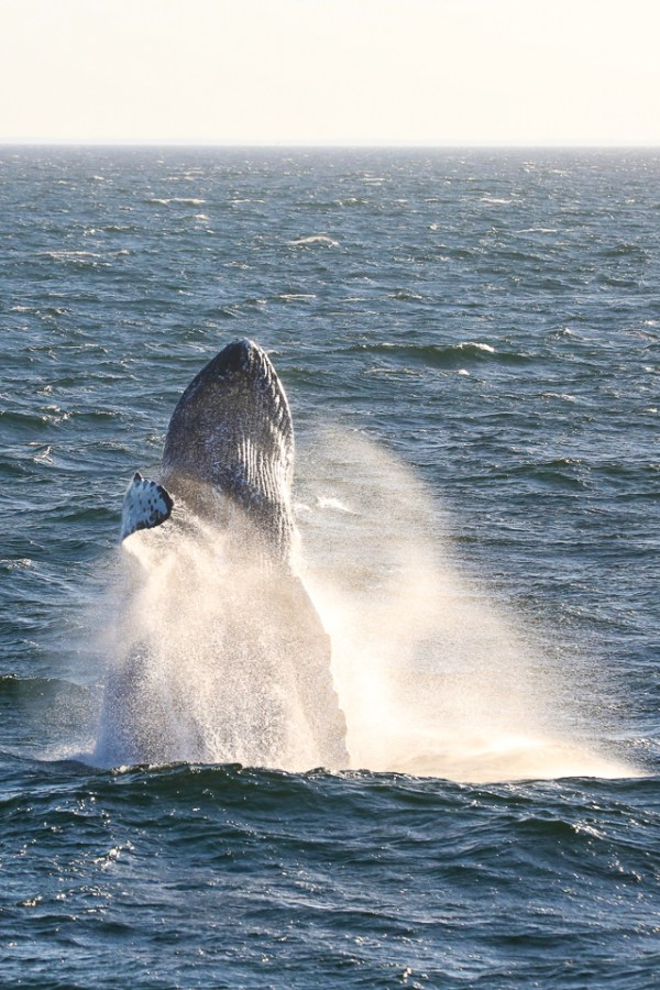 Whale Watch 003