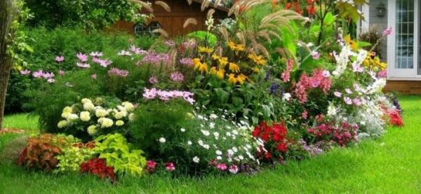 """Неприхотливые и долгоцветущие цветы """"многолетники"""" для ..."""