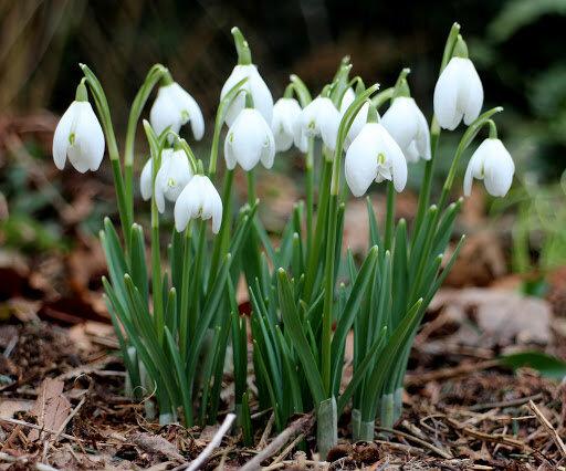 Какие цветы цветут весной с названием и фото | Народные ...