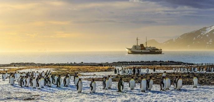 Pingouins, sur l'île Gérogie du Sud