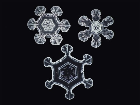 Snowflakes, by Nathan Myhrvold