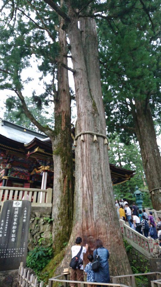 三峯神社拝殿前にあるご神木