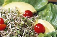Salada de Brotos com Abacate com Molho de Limão, Manjericão e Tomilho