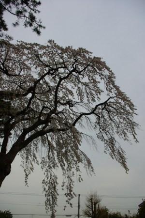 寿公園の江戸彼岸