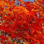秋の大沼・紅葉満喫まつり!