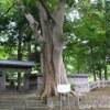 松前家墓所の巨木群