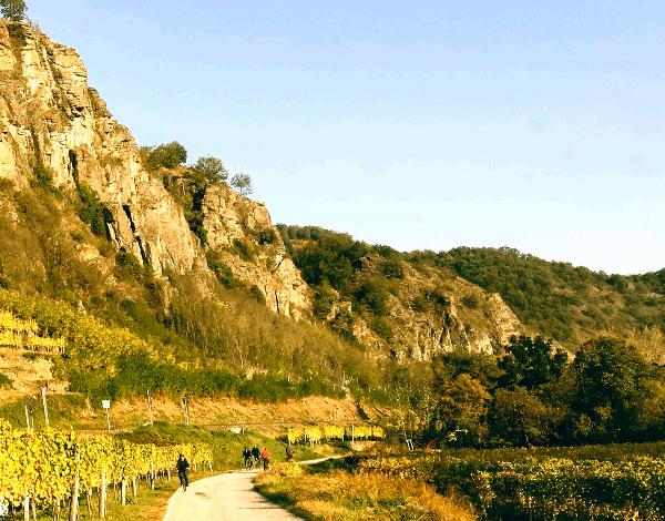 Die typischen vor Jahhunderten bereits angelegten Terrassenweingärten entlang der Donau und die dort gedeihenden feinfruchtigen Rieslinge und Grünen Veltliner, machen das Weltkulturerbe Wachau zu einem der bedeutendsten österreichischen Weinanbaugebiete.
