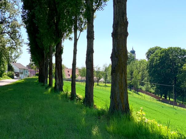 Der Park von Schloß Schönbühel in der Wachau