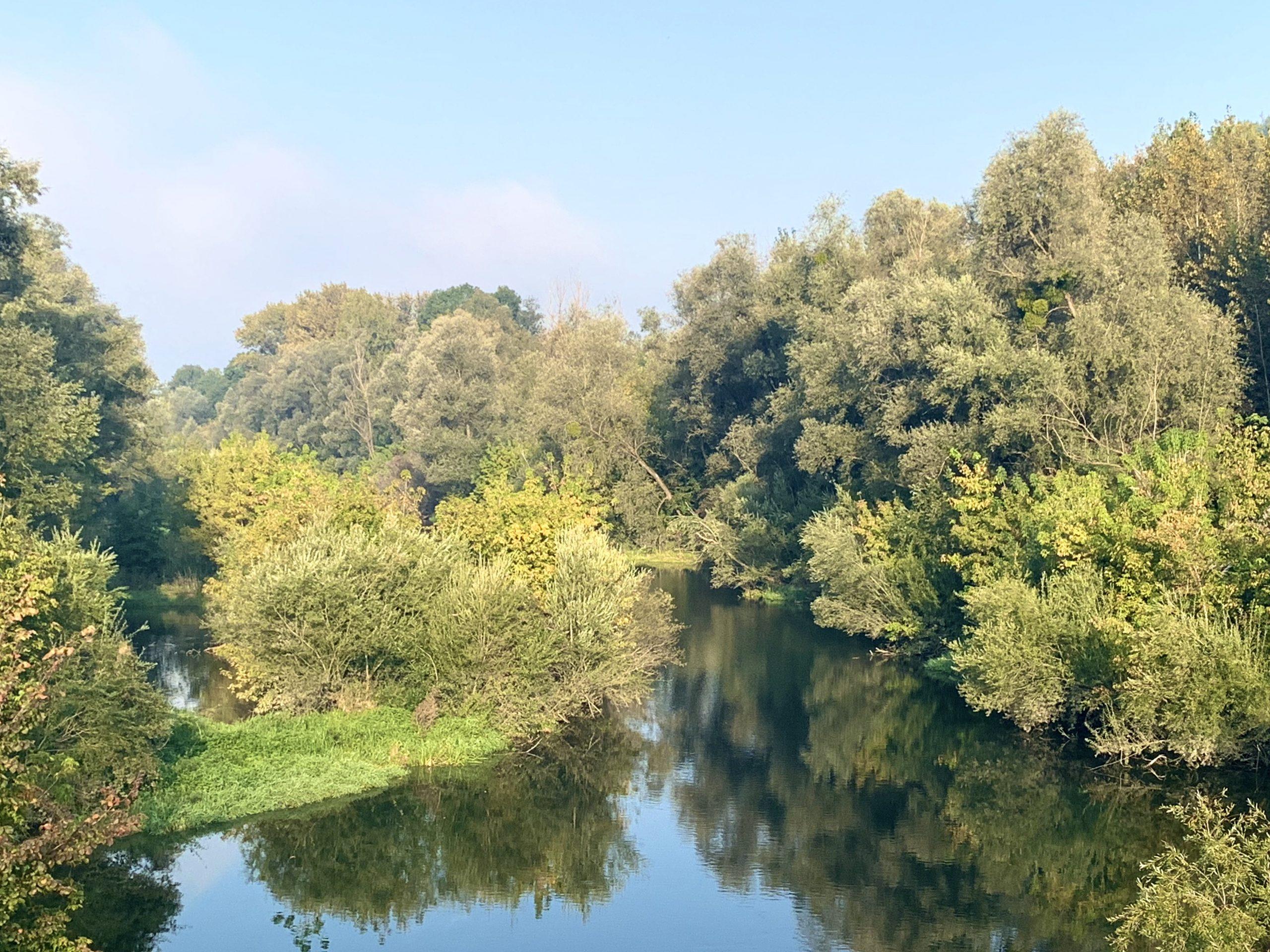 Sammelgerinne der Donau in der Au bei Abwinden
