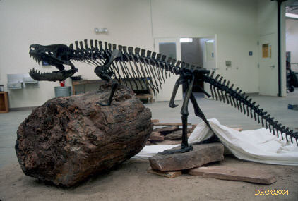 A rauisuchian known as Postosuchus. This bronze statue is now also on display at the MCC dinosaur museum.