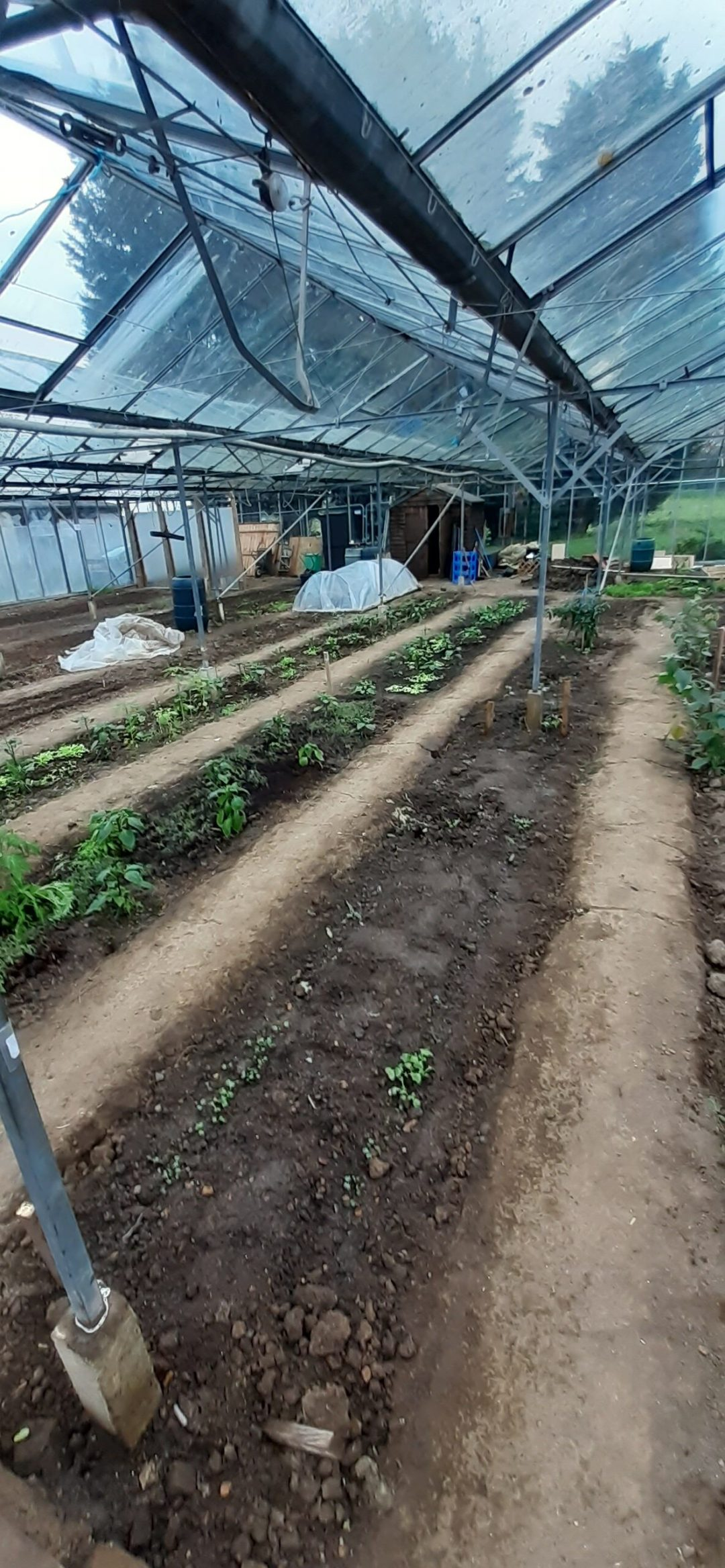 Crops Not Shops - a row of plants under a greenhouse canopy