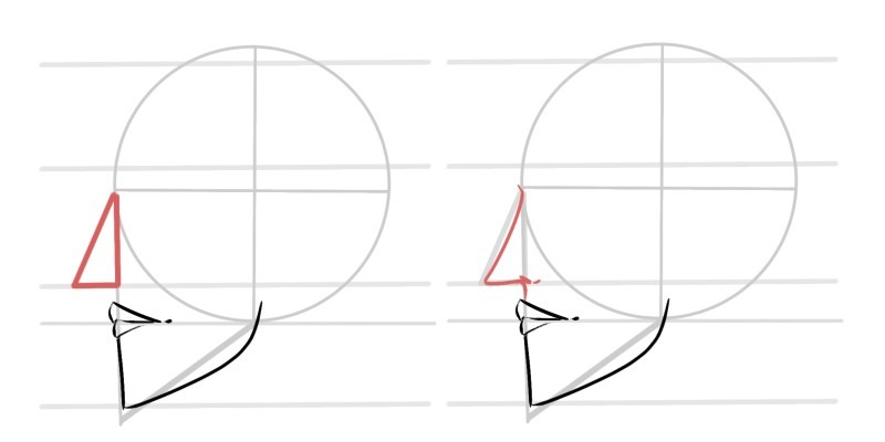 The nose looks like a triangle when being drawn from the side.