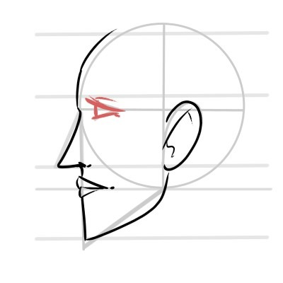 The eyes have a cone shade when drawing a face from the side.
