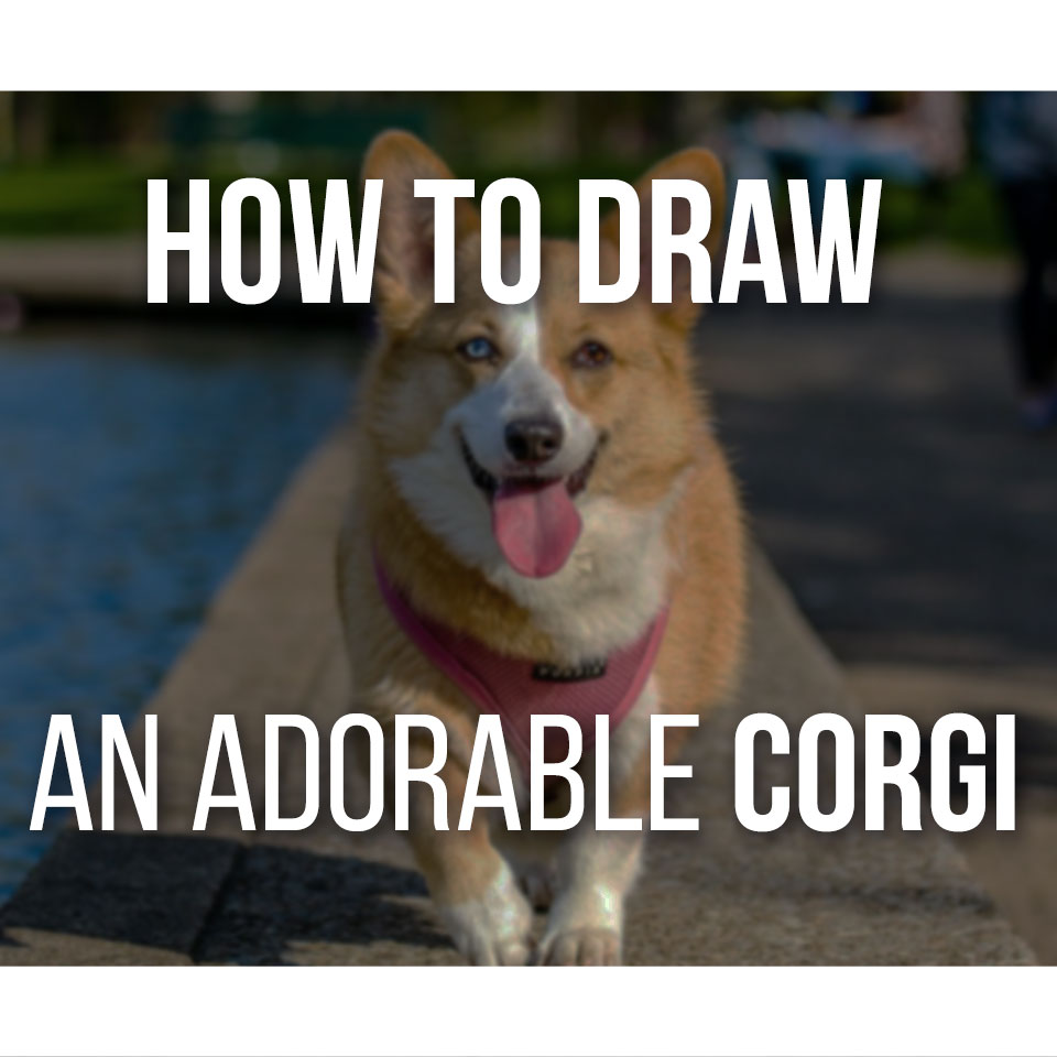 How To Draw An Adorable Corgi Step by step, the easiest way to draw dogs!