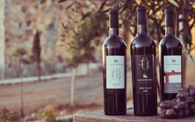 Are Mexican wines ready to take on the world?