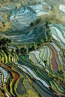Arrozales de Yunnan, China. ASIA
