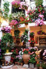 Feria de los Patios de Córdoba