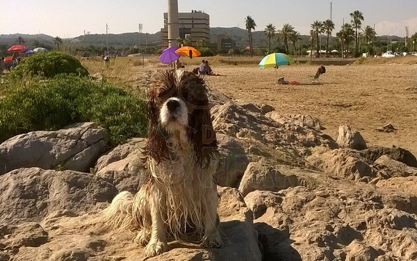 Cubelles,La Playa de les Salines