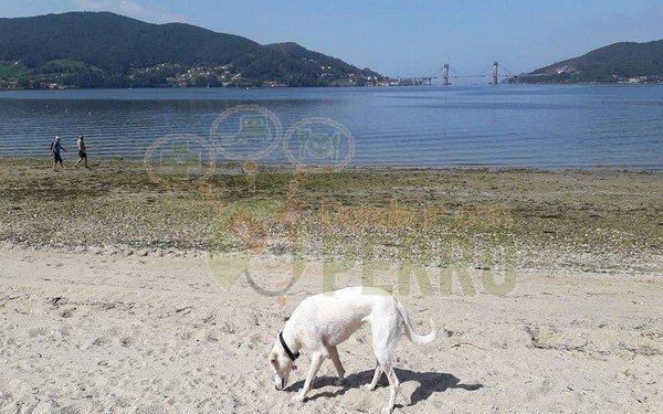 playa cesantes (3)