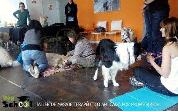 dogschool (7)