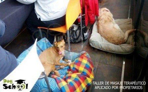 dogschool (9)
