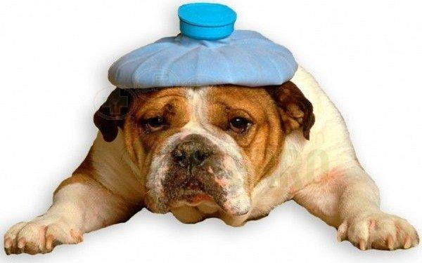 Seguro para mascotas con muy buena cobertura y precio