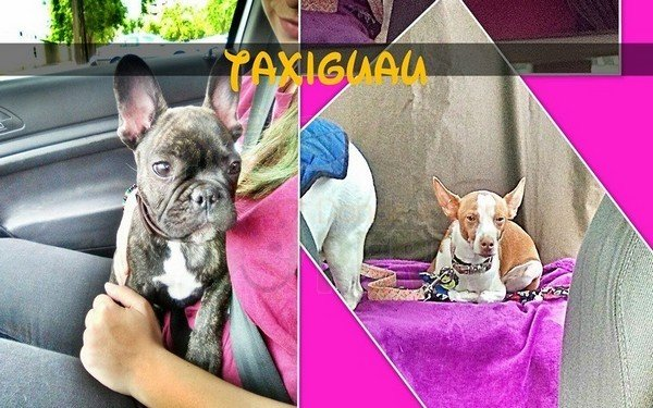taxiguau zaragoza (3)