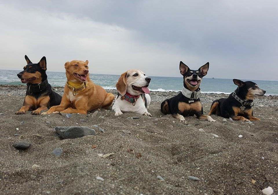 ¡Donde ir con 5 perros!.. o más.