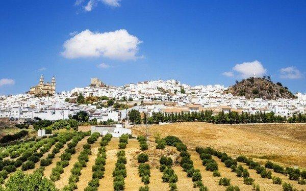 Donde ir con perro en Andalucía