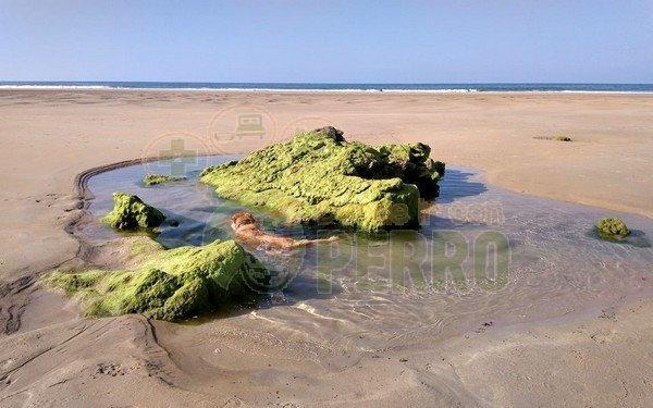 playa de Trengandín (4)