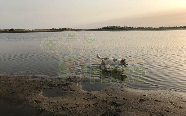 playa de la gola (1)