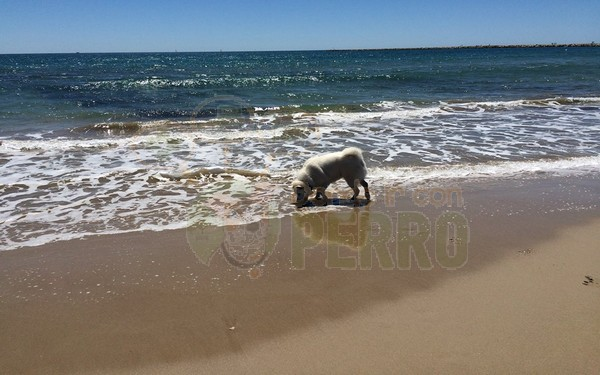 pineda del mar (2)