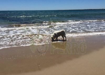 Playa Pineda de Mar
